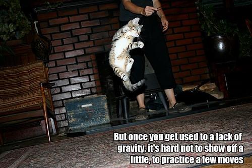 LOLCat tryouts in zero gravity