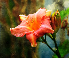 A Budding Romance...Part Two of Two (ozoni11) Tags: flowers flower texture nature gardens photoshop garden interestingness nikon blossom blossoms explore textures bloom buds bud blooms d300 372 interestingness372 i500 michaeloberman explore372 ozoni11