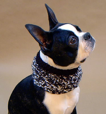 Black and White Dog Neck Warmer