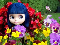 Colour Splash! (Shara Lambeth) Tags: flowers summer flower color colour floral japan garden japanese flora colorful doll pansy australia melbourne blythe colourful custom dolly hue asianbutterflyencore thepaperdoll paperdollaustralia