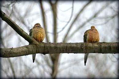 love-doves
