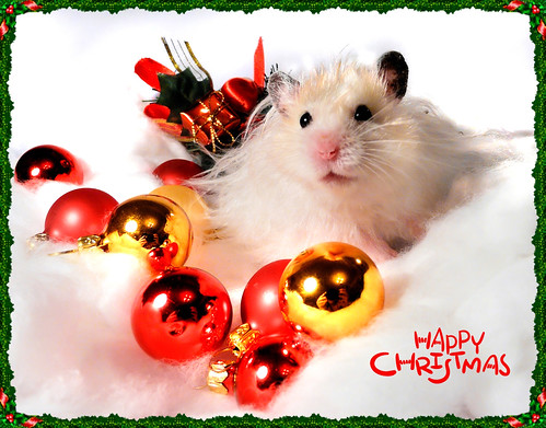 Merry Christmas From Piorko Hamster