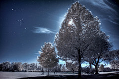 Silent Night (darth_bayne) Tags: christmas trees night clouds stars infrared moonlight hdr orionconstellation christmasnight silentnight goldstaraward vosplusbellesphotos