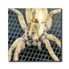 Florida Spider (Martin_Bennett) Tags: hairy spider florida 8legs