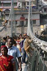 リシュケシュに掛かるつり橋。ヨガ道場がせめぎあう場所には2本の釣り橋があり、サルの遊び場と化している。