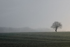 Tree ((Erik)) Tags: light tree grass fog one haze meadow boom minimal note oldtree lonelytree noteboom sippenaeken notenote grilligeboom notenotenotenotenotenotenotenotenotenote