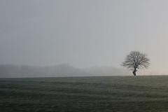 Tree ((Erik)) Tags: light tree grass fog one haze meadow boom minimal note oldtree lonelytree noteboom sippenaeken notenote grilligeboom notenotenotenotenotenotenotenotenotenote