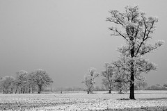 Belgium - Kalmthout (RURO photography) Tags: travel winter panorama snow tree tourism nature canon landscape fun photography bomen europa europe view belgium belgique photos hiver sneeuw belgi natuur reis boom neige lonelyplanet arbre europeanunion ei weiland landschap nationalgeographic belgien reizen discoverychannel laneige lhiver kalmthout europeseunie akker supershot kartpostal besneeuwd enstantane achterbroek globalbackpackers discoveryphoto rudiroels