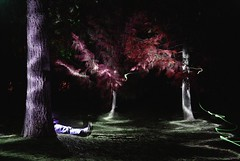 "resting behind the pine (Ry"") Tags: longexposure selfportrait lightpainting color tree self dark aperture colorful dream spooky flashlight d80 aperture2 lightjunkies coloreffexpro"