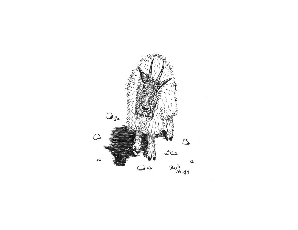 Mountain Goat Pen Drawing And Original Photo