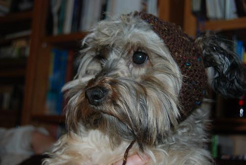 Its a Babushka Puppy!