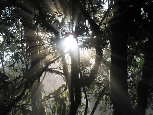kakamega-forest