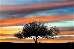 sunset tree (jody9) Tags: sunset silhouette saltonsea lonesometree gettyvacation2010