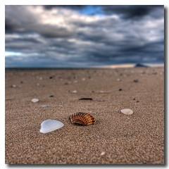 Alone (Vicent de los Angeles) Tags: sea blur beach valencia clouds canon eos mar spain sand bokeh shell playa arena desenfoque nubes concha borroso xeraco 40d anawesomeshot