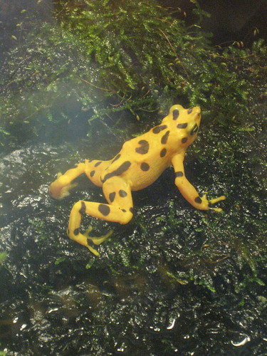 4/27/10-NatlZoo, Adorable poison frog