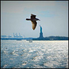 Seagull of Liberty (! .  Angela Lobefaro . !) Tags: nyc newyorkcity trip travel blue sunset sea vacation urban ny newyork max reflection bird nature water ferry backlight sailboat river landscape boat fly flying cityscape action crane patterns seagull move cranes statueofliberty statenisland angela gabbiano allrightsreserved italians sherri holidaysvacanzeurlaub angelamlobefaro produzioneriservata gettyvacation2010