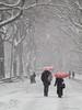 A Stroll in the snow #1 (CVerwaal) Tags: nyc newyorkcity winter red snow newyork umbrella canon centralpark umbrellas redumbrellas aplusphoto canong9