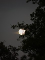 Hidden Moon (priscilla.starling) Tags: trees sky moon white black home nature silhouette night evening glow branches orb full fullmoon late brillianteyejewel yourpreferredpicture allthingsmoon sacredmoon