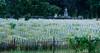 Cemetery (Luc Deveault) Tags: canada dead quebec mort cemetary tomb québec luc cimetiere tombe cloture deveault lucdeveault