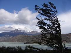 Torres del Paine - trek - lagune - arbre vent