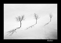 ( Ali Shokri / www.alishokri.com) Tags: winter blackandwhite bw black tree beautiful landscape blackwhite bravo perfect searchthebest iran quality azerbaijan loveit photoart soe 07 backandwhite cubism   naturesfinest goldenglobe blueribbonwinner littlestories bwdreams supershot  5photosaday outstandingshots flickrsbest utatafeature abigfave shieldofexcellence platinumphoto anawesomeshot superaplus aplusphoto ultimateshot holidaysvacanzeurlaub superbmasterpiece treesubject diamondclassphotographer flickrdiamond megashot allin1 bratanesque ysplix amazingamateur excellentphotographerawards superlativas theunforgettablepictures onlythebestare eliteimages excapture flickrslegend betterthangood theperfectphotographer goldstaraward ostrellina picswithsoul showmeyourqualitypixels alemdagqualityonlyclub wwwalishokricom alishokri goldenvisions