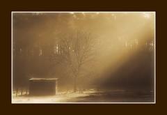 God speaks! (♥ Damona-Art •.¸¸.•´¯`•.♥.•´¯`) Tags: morning trees light nature sepia dawn nikon raw belgium god explore forests d300 roq bookofsecrets picswithframes diamondclassphotographer flickrdiamond excellentphotographerawards thesecretlifeoftrees devined