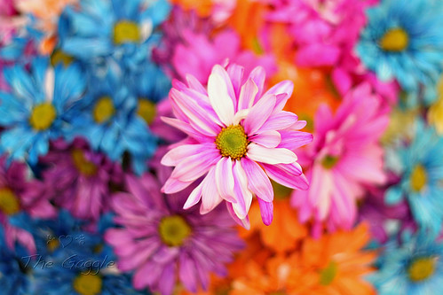 Pretty Flowers Bokeh