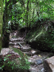 Forest Path (icelight) Tags: tree peru stone shadows path andes cloudforest inkaterra