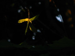 elusive ray of light