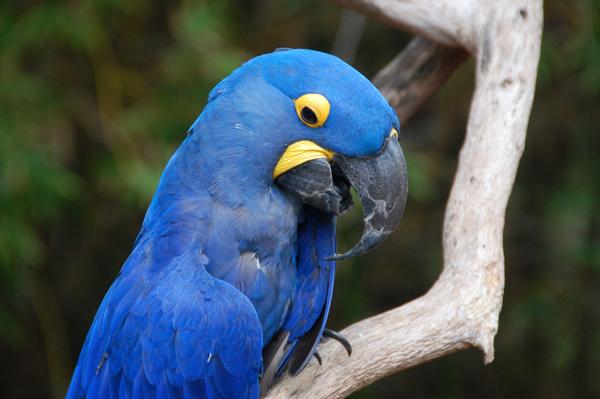 Bird0299