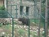 Állatkert, Veszprém (Kapcsándi István) Tags: veszprém családi állatkert