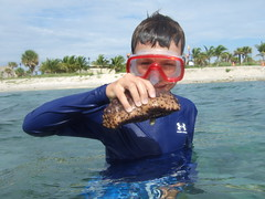Andrew Discovers a Sea Cucumber!