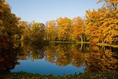 Autumn Pond (Hagens_world) Tags: autumn daytimeseason forest gardensparks landscapenature tree waterlakeoceanriver neschwitz sachsen germany herbst otoño lausitz lausacia lusatia lužyca lužica luzici hagensworld luzicilausitz hagensworldphotography nutzungshonorar forsale askforcommercialuse bildagentur stockphotography kommerziellenutzung stockphotos clear day pwfall
