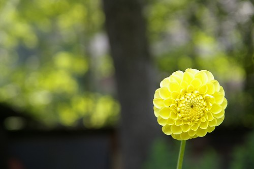 """小花, 想拍出""""奶油般""""的散景, 看來功力不足...."""