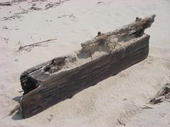 IMGP0248 (paulsyak) Tags: kayak lewes delawarebay beachplumislandshipwreck