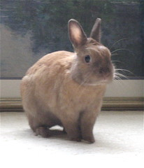 My Perfect Bunny (lotsalashes) Tags: cats rabbit bunny bunnies cat guineapig kitten kittens rabbits