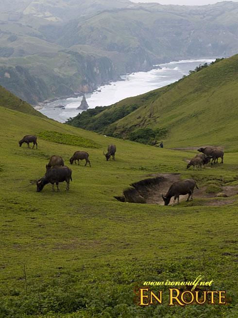 Marlboro Hills Grazing Cows