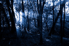 sun shine shinin' (jon.nelson) Tags: trees sun sunshine forest dark outside outdoors woods jon nelson aliens rays 2008 ohgodtheyregoingtogetme