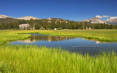 Tuolumne Meadows Reflections | RAW (David Giral | davidgiralphoto.com) Tags: california park trees usa reflection grass forest meadows pines national naturalbeauty sierranevada tuolumnemeadows yosemitepark nohdr nophotomatix withahintofsaturation
