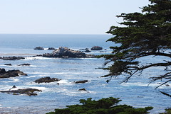 Point Lobos