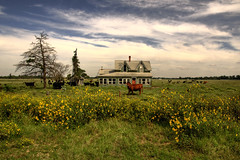 A Moment at the Farm (Jeff Clow) Tags: abandoned oklahoma farmhouse landscape raw cattle handheld dfw wildflowers 1exp ultimateshot jeffrclow