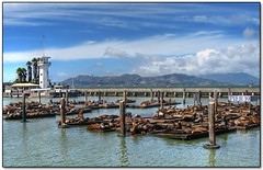 San Francisco Sea-Lion Hotel (Mike G. K.) Tags: sanfrancisco california wood bridge sky usa seagulls mountains water birds clouds restaurant harbor pier boat wooden logs goldengatebridge fishermanswharf poles sealions pier39 hdr platforms forbesisland photomatix tonemapped tonemapping bej fineartphotos golddragon platinumphoto singlejpghdr panoramafotogrfico