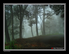 The woods are lovely, dark and deep (| JERRY |) Tags: india mist forest joseph woods jerry kerala wayanad southindia keralam godsowncountry thewoodsarelovelydarkanddeep sonydsch9 jerryphotography jerrycllicks