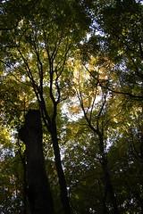Nerstrand woods
