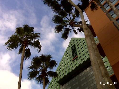 IMG00703-Walt-Disney-World-Dolphin-palm-trees-sky
