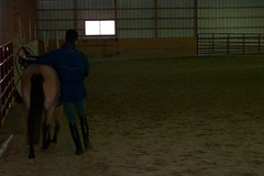 Eric uses his body as an aid (janred) Tags: dressage carriagedriving breezie longreining chalamet ericchalamet
