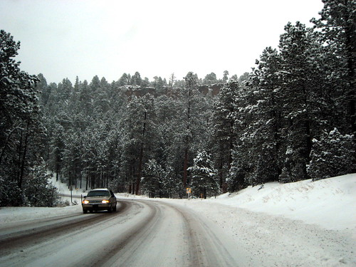 Trees and mountains and an unplowed road