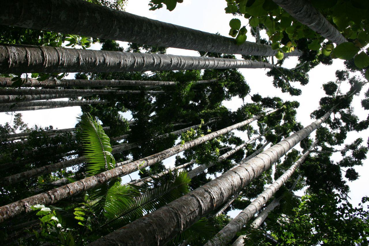 Paronella Park Trees
