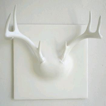 pieces white deer antlers