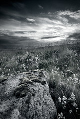 Elven Country (Villi.Ingi) Tags: flowers summer sky bw nature grass rock sepia fairytale clouds canon iceland moss dramatic kingdom elf getty lichen cinematic magical reykjavk mosi gettyimages elven geldinganes pipc dapa alemdag 40d dapagroup dapagroupmeritaward dapagroupmeritaward3 dapagroupmeritaward5 dapagroupmeritaward4 dapagroupmeritaward2 alemdagqualityonlyclub